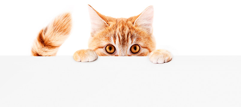 gato-cuidador