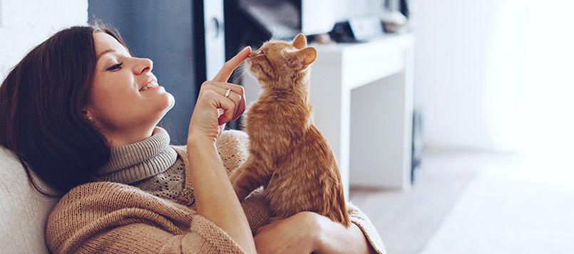 gato-conocido