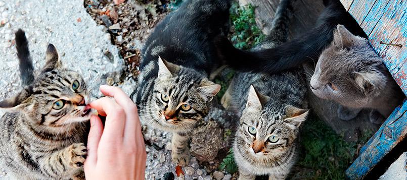 gato-residencia