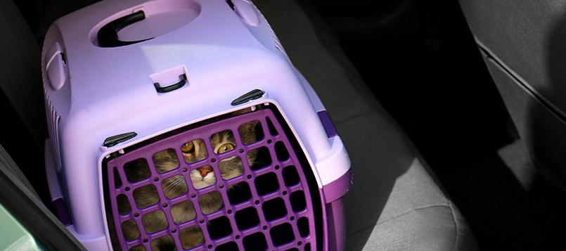 gato-coche