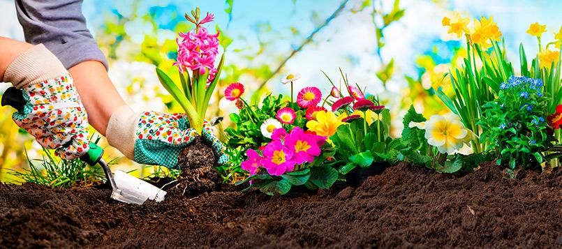 jardin-abono