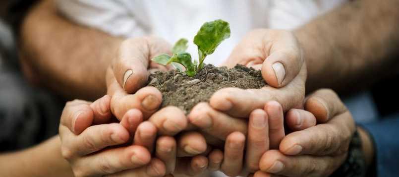Busca los limpiadores más ecológicos para el hogar