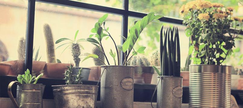 Plantas para tu hogar más ecológico