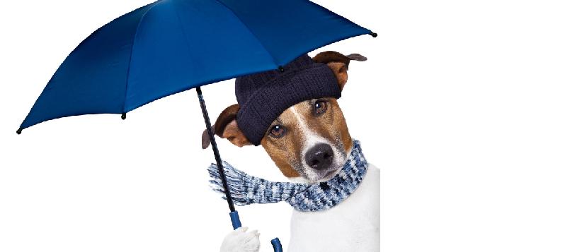 Compra un chubasquero para tu perro