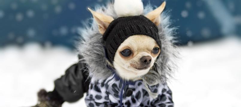 Descubre qué hacer con los perros en la nieve