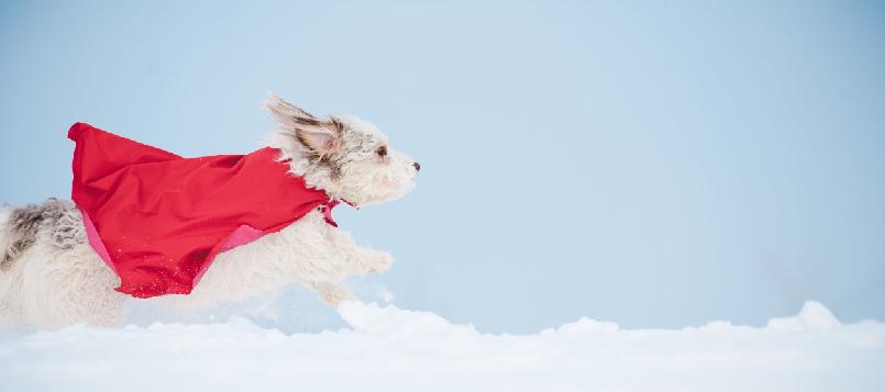 Qué hacer con tu mascota en invierno