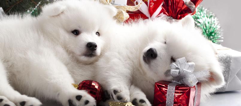 Los perros tienen frío en invierno