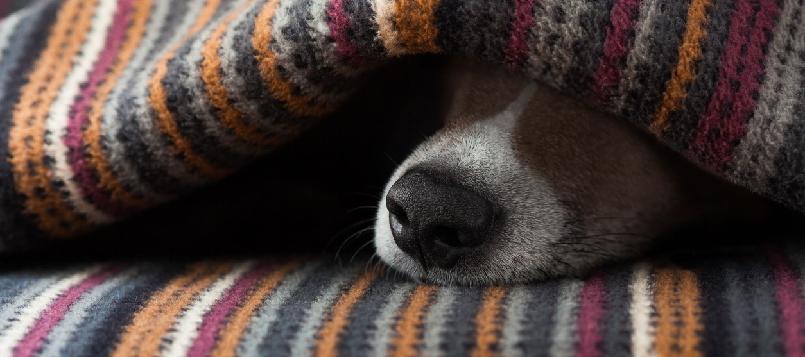 Compra un abrigo para perros