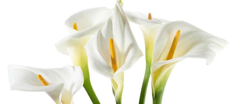 Descubre las mejores flores de interior para tu casa