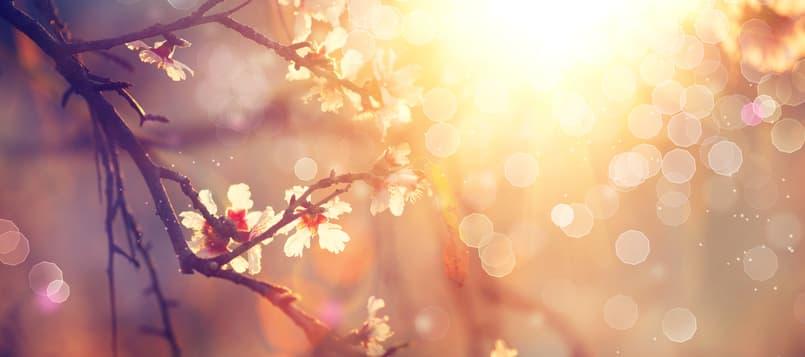Cosas-que-hacer-con-niños-en-primavera-1