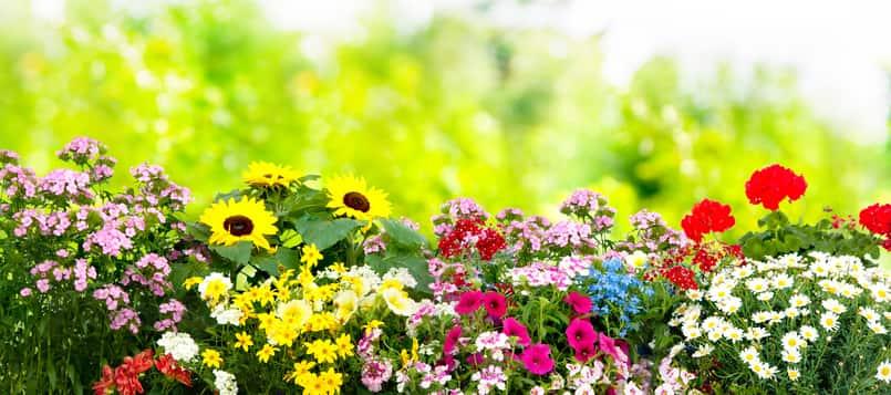 Que siginfican las principales flores 1