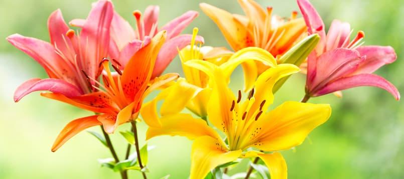 Que-representan-las-principales-flores-4