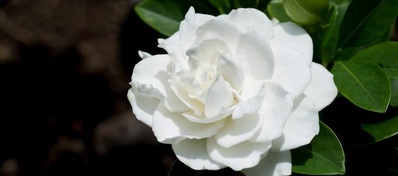 El-lenguaje-de-las-flores-5