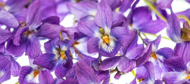 El-significado-de-las-flores-6