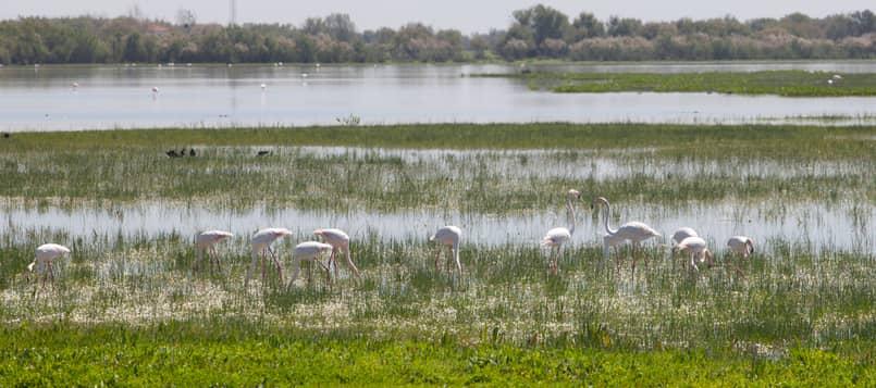 Descubre-Doñana-2