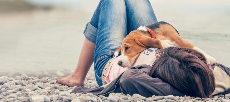 Prepáralo-todo-antes-de-ir-a-la-playa-con-tu-perro
