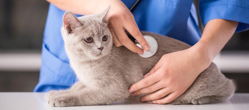 problemas-articulaciones-gato