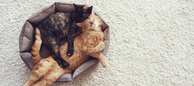 bajon-actividad-gato