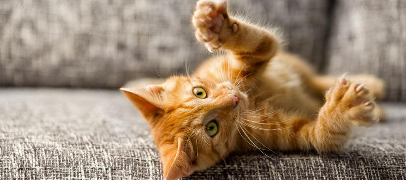 gato-parásitos