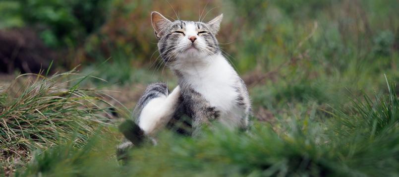 gato-otoño