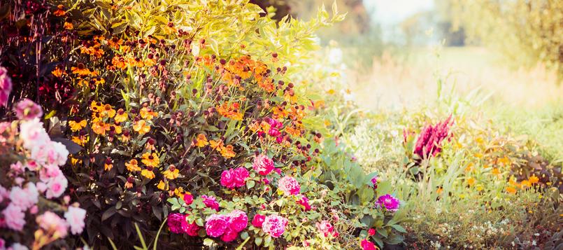 Cuáles son las flores del otoño 1