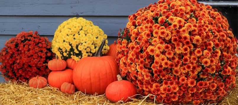 Tipos-de-flores-en-otoño-2