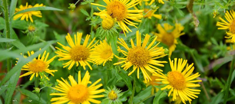 Flores-del-invierno-4