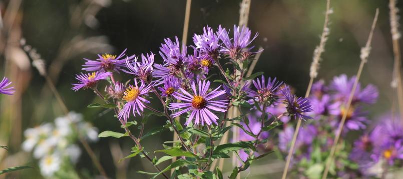 Flores-con-tiempo-frío-5