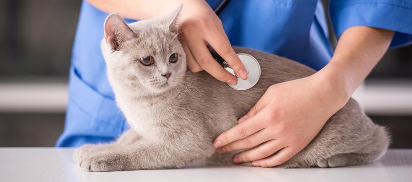 Mascota-en-el-veterinario-8