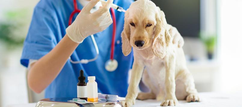 Cuándo-llevar-la-mascota-al-veterinario-7