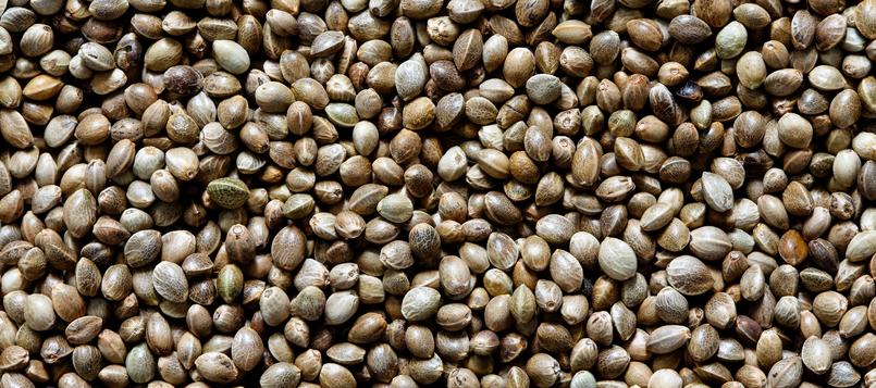 semillas-de-cañamo-en-la-cocina-2
