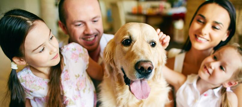 pasos-para-adoptar-un-perro-1