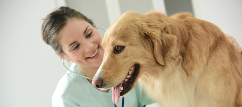 pasos-para-adoptar-un-perro-4
