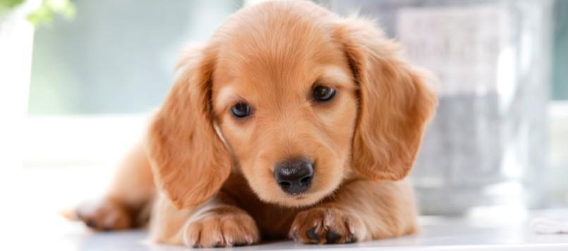 cómo-cuidar-a-tu-cachorro-cuando-se-acerca-el-buen-tiempo-8