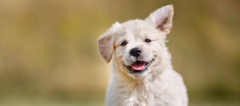 cómo-cuidar-a-tu-cachorro-cuando-se-acerca-el-buen-tiempo-1