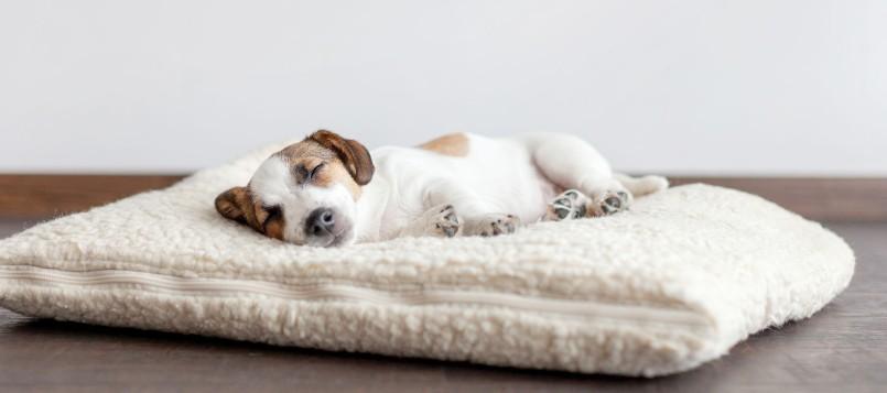 cómo-cuidar-a-tu-cachorro-cuando-se-acerca-el-buen-tiempo-3