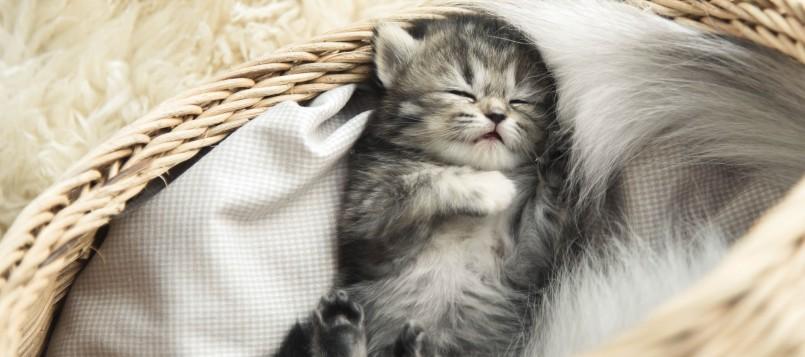 gatito-contra-el-calor-5