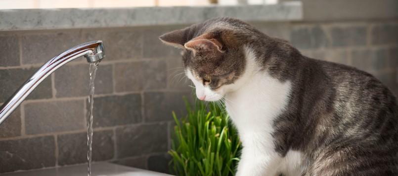 calor-y-gatos-3