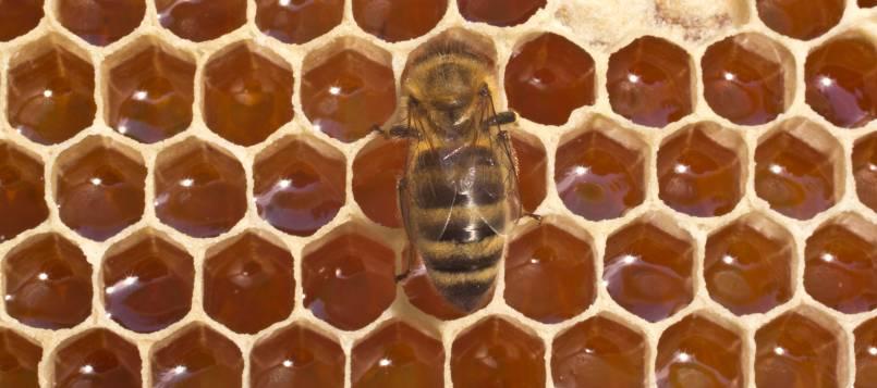 Las abejas son las reinas de la optimización del espacio.