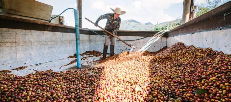 proceso húmedo en procesos del café