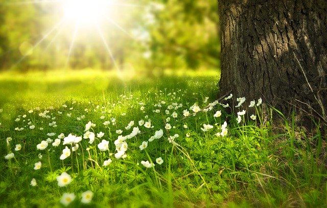 estaciones-en-ingles-primavera
