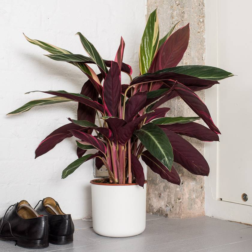 How to choose the right plants for your home or office