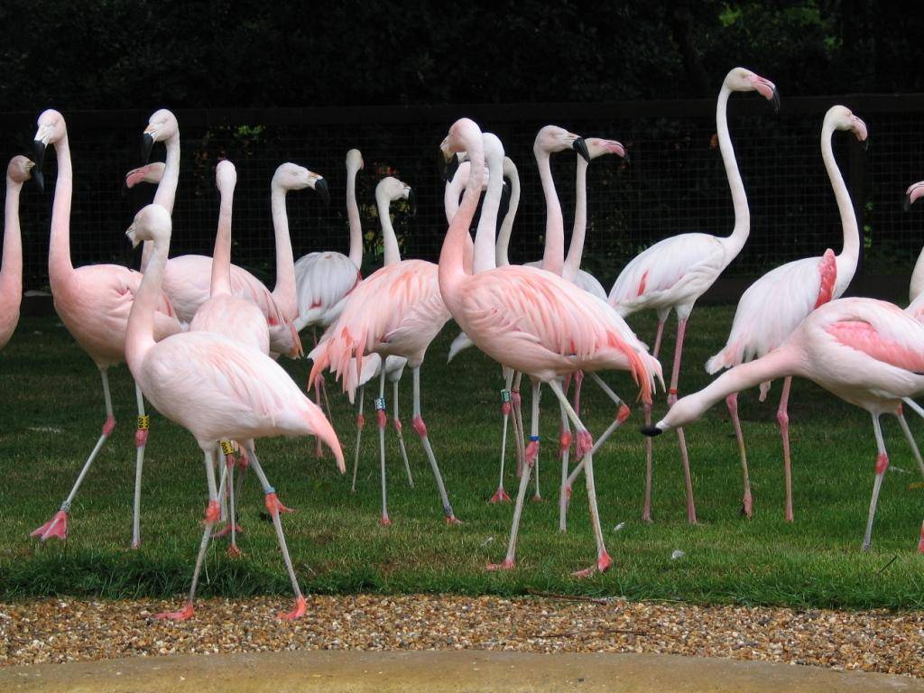 Flamingos at Paultons Park
