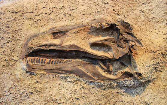 What is a Dinosaur Fossil?