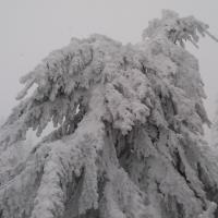 Zamrzlé stromy na Koruně.jpg