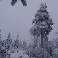 Homole - střední vrch (2).jpg