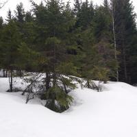 3 - cesta sněhem na Hůrecký vrch.jpg