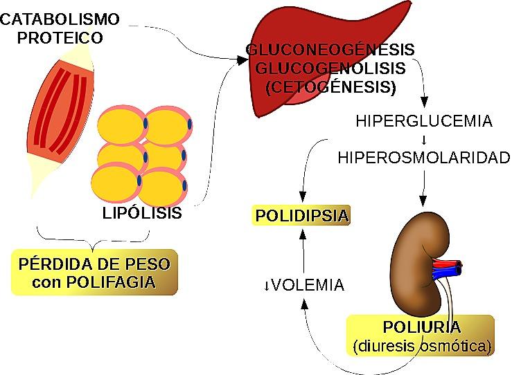 Perdida de peso hiperglucemia
