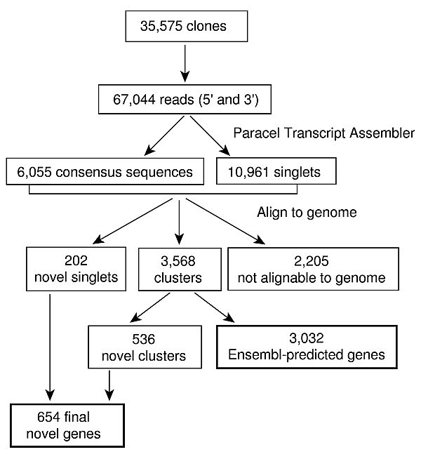 Flow chart of sequence processing and categorization