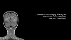 Overview of neuroimaging phenotypes